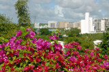 Flowers along the driveway to the Marriott Guam Resort