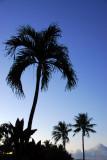 Tumon Bay palm at dusk