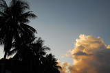 Palm trees and tropical clouds, Koror