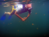 Dad snorkeling at Jellyfish Lake, Palau