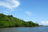 Mangrove forest at the mouth of the Ngerdorch River