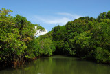 Ngerdorch River, Babeldaob, Palau