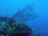 Big Drop-off, Palau