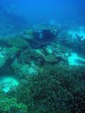 German Channel, Palau