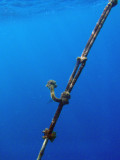 Mooring line at the Blue Hole