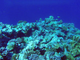 Limestone caves have been carved out below the reef