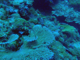 The day's second dive, Blue Corner, very close to the Blue Hole Dive