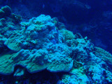 Coral outside the Blue Hole