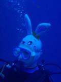Japanese Rabbitfish
