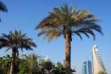 Palm Trees, Zabeel Park