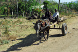 Two young boys driving a mule cart