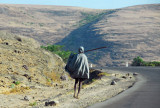 Ethiopian walking along the road with a staff