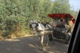A horse-drawn cart headed to Gondar