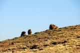 We came across Gelada soon after the start of our trek