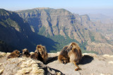 Gelada and the Northern Escarpment, Simien Mts