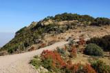 The escarpment trail rejoins the park road for a short distance
