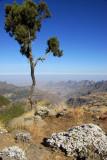 Tree on the escarpment, Chenek