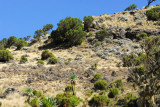 The Ibex can be difficult to spot