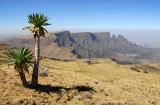 Giant Labelia and Imet Gogo, Simien Mountains National Park