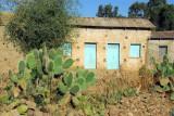 Cactus, Axum