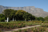 Rose Garden, Company's Gardens, with Table Mountain
