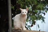 Cat with blue and green eyes, Culion