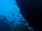 Wreck of the Kogyo Maru