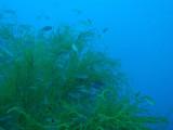 Corals and fish on Kogyo Maru