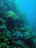 Coral completely covering the Lusong Gunboat