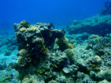 Clear water and healthy reef, Cadlao Tip