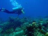 Diving Cadlao Tip, El Nido