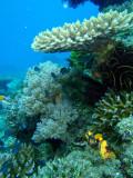 Coral reef, Cadlao Tip, El Nido