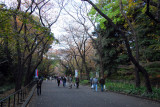 Tree lined walkway, Ueno-kōen Park