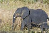 Puku Pan - elephant