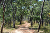 Tsetse fly zone around the airstrip but not the lodge