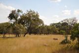 McBridge's Camp is within Kafue National Park proper