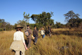 Walking safari from McBride's Camp