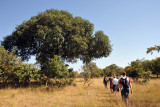 Walking through the bush of Kafue National Park back to McBride's Camp