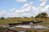 Mokoros - wooden dugout canoes used in the wetlands of Southern Africa