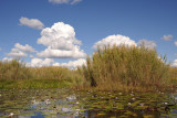 Bangweulu Swamps with white puffy clouds