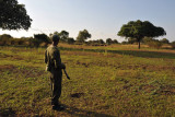 Zambian scout watching for any signs of trouble from the buffalo herd