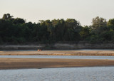 Hippo on a sandbar in the Luangwa River