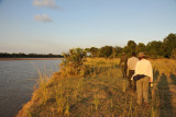Walking safari along the banks of the Luangwa River