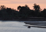 Hippo in the Luwanwa River