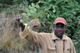 Philemon showing us a weaver birds next on the morning walking safari back to Wildlife Camp