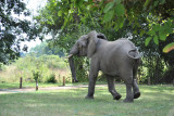 Elephant at the chalets in Wildlife Camp