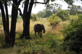 Elephant from the porch of my chalet, Wildlife Camp
