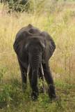 Elephant at Wildlife Camp