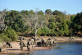Elephants, Chobe National Park
