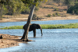 Elephant in the Chobe River, Botswana